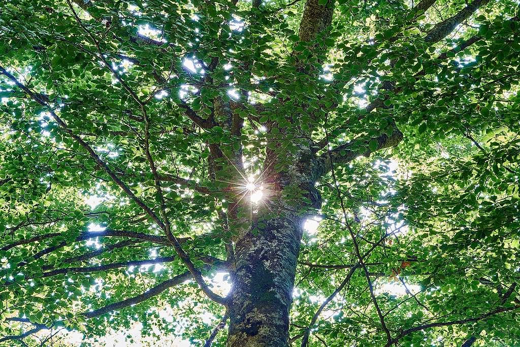 Waldschutz: Greenpeace Schweiz setzt auf Unabhängigkeit gegenüber FSC
