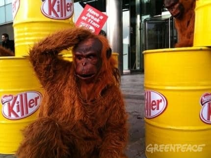 Nestlé verwendet Palmöl aus Urwaldzerstörung, auch für Kit Kat