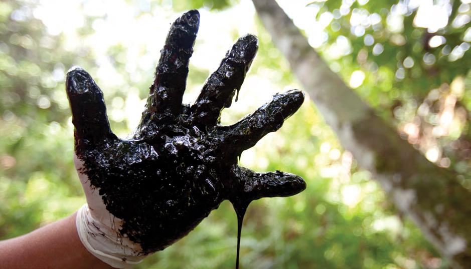 Neuer Bericht deckt auf: Schweizer Banken finanzieren den Handel mit umstrittenem Amazonas-Öl