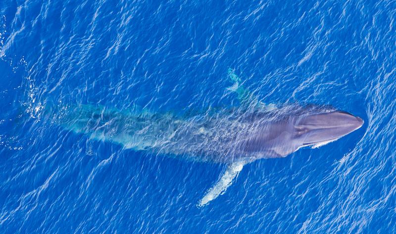 Die grössten kleinen Wale