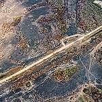 Révélation : L'élevage bovin détruit le Pantanal brésilien