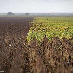 Certi-FICTION : la véritable histoire du soja, de l'huile de palme et du chocolat certifiés