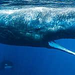Unsere Ozeane befinden sich in einer Todesspirale