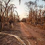 Brasilien: Verwandlung des Pantanal in Hackfleisch