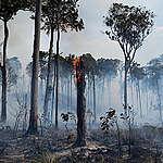 Weshalb der neue Entwaldungsrekord im Amazonas und weltweit auch die Schweiz betrifft