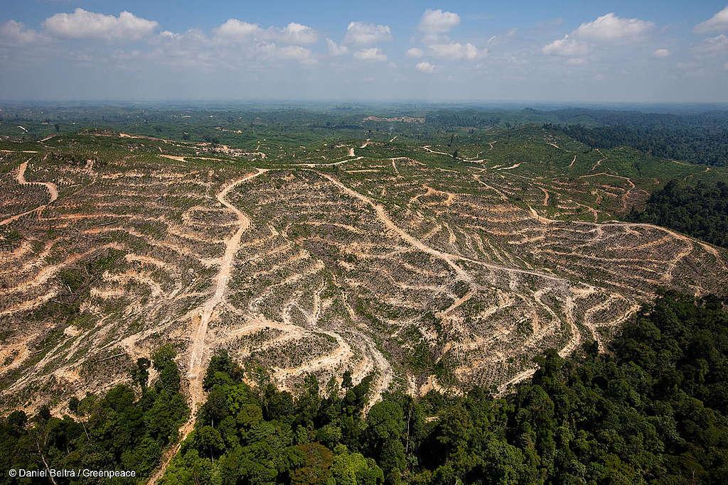 Référendum contre l'accord de libre-échange Suisse Indonésie: position de Greenpeace Suisse